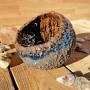 Piala Blue laguna
